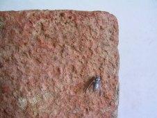""" vespa "" - 2007, cm 30x16x6, tin cast and brick"